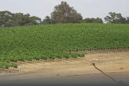 Rupert's Ridge Estate Vineyard