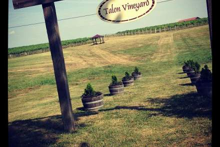 Talon Winery and Vineyards