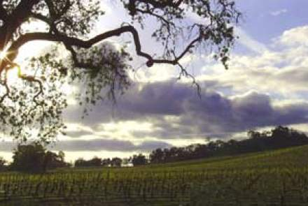 Kenneth Volk Vineyards, Paso Robles