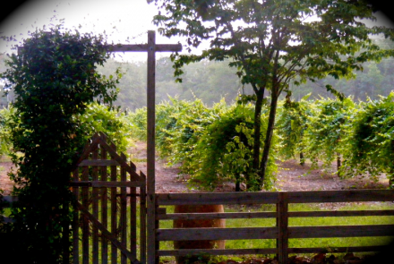 Watermelon Creek Vineyard