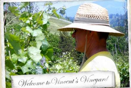 Vincent's Vineyard