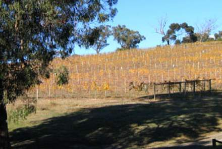 Yarra Yarra Vineyard