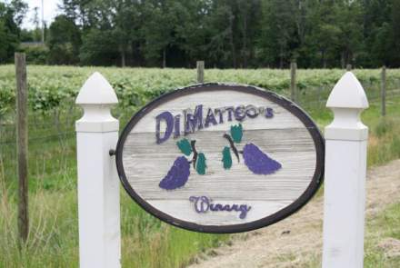 DiMatteo's Winery and Vineyards